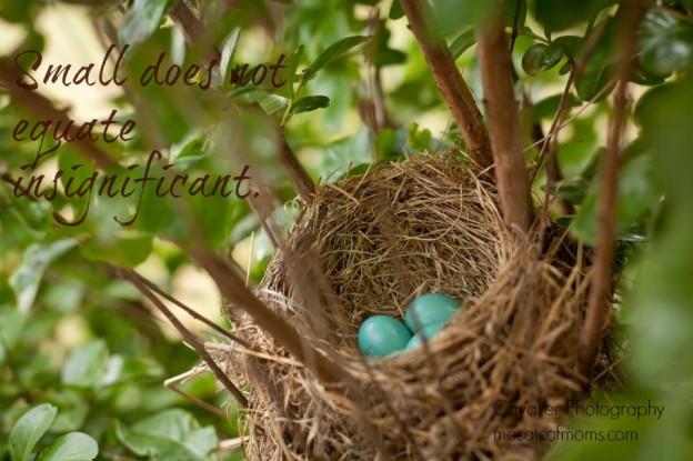 bird-eggs-pic-monkey-624x415 (2)